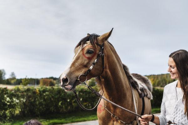 Årets Djurhjälte – Terapihästen Hannibal?