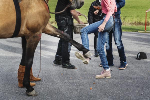 Årets Djurhjälte - Hästen Hannibal